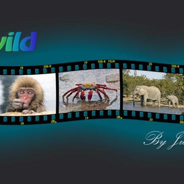 Pix of Wild Website